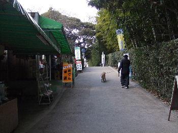 2011_03030015.jpg