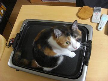 猫焼きにするぞ~