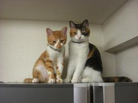 Cats on Refrig.