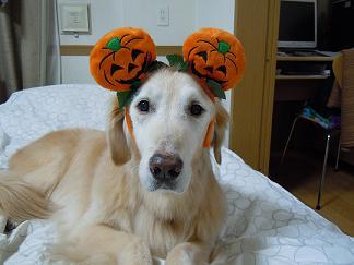 Happy Halloween_Simba
