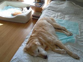 ベッドが違うっちゅーの!