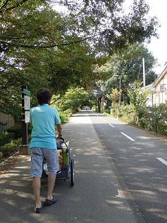 シンさんの散歩道