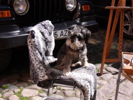 絵描きさんの犬