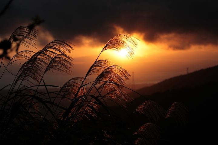 夕焼けに揺れるススキ