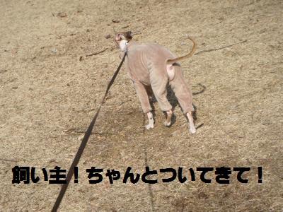 005_convert_20110220122945.jpg