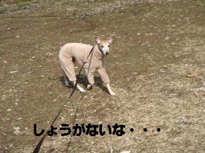 008_convert_20110220123227.jpg
