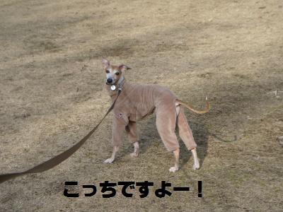 013_convert_20110220123523.jpg