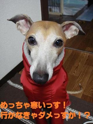044_convert_20110212203103.jpg