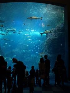 4水族館て#12441;見上け#12441;る二人