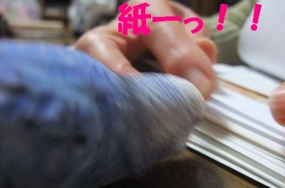 紙ーっ!!