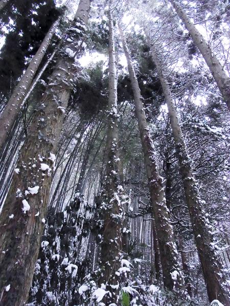 2011-0102-3.jpg