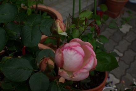 フレグランスの花♪