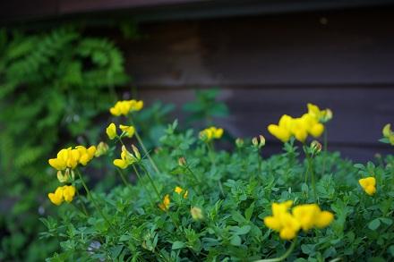 かわいいお花。