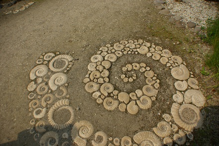 アンモナイトの石畳。