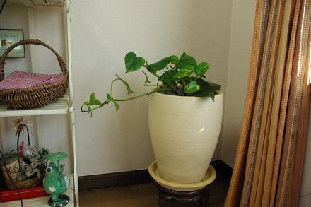 ポトスも植えたよ。