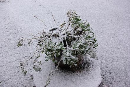 雪が積もりました…。