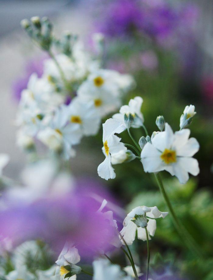 雛祭り花 158