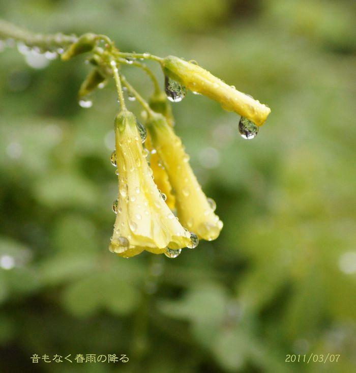 雨に濡れS2 008