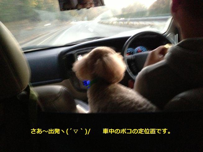 車中のポコ