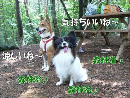 森林浴~(*^_^*)