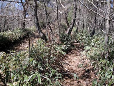 三国山へ登る