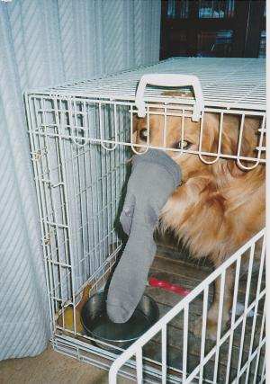 アルフ靴下