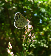 藍の花と蝶