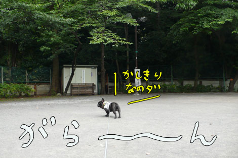 hatsu2.jpg