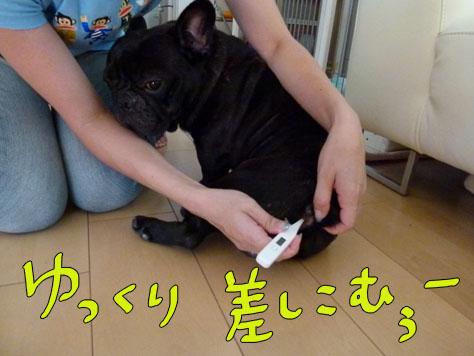 kenon7.jpg
