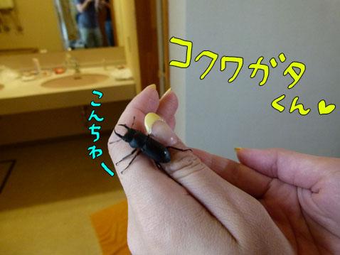 natutabi31.jpg