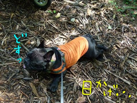 natutabi46.jpg