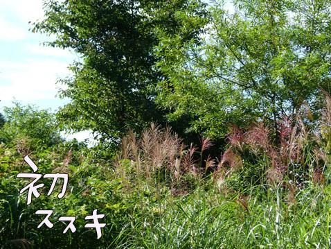 natutabi77.jpg
