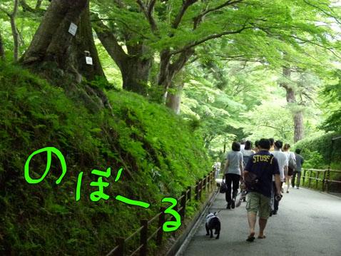 natutabi9.jpg