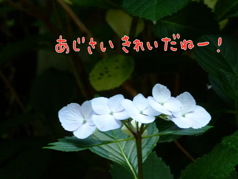 sakuranbo5.jpg