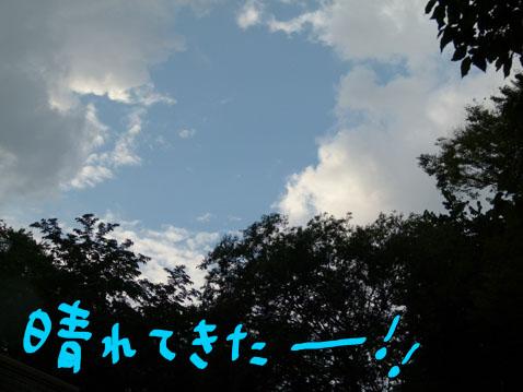 taibo4.jpg