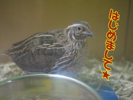 yosaku2.jpg