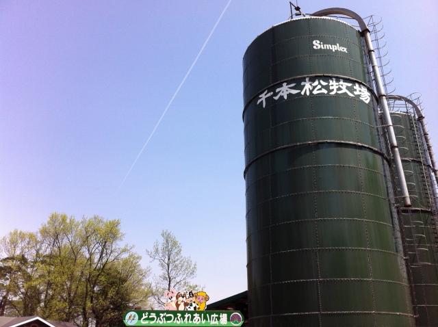 千本松牧場1