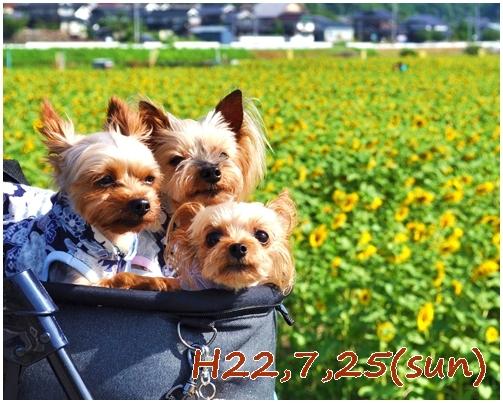10_20121205231655.jpg