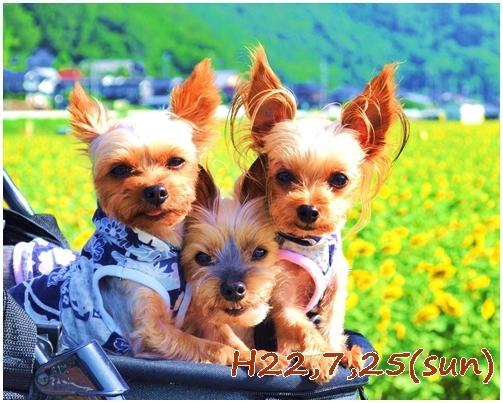 11_20121205231730.jpg