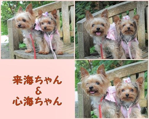12_20121207224738.jpg