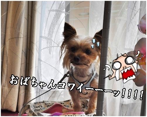 17_20120717220854.jpg
