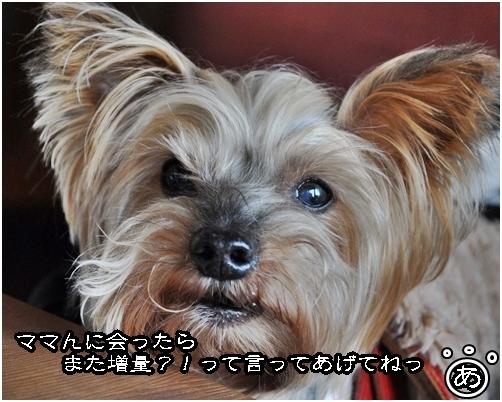 18_20120426184014.jpg