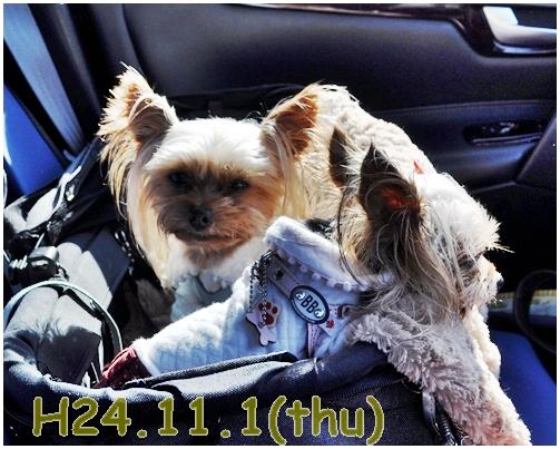 1_20121201233636.jpg