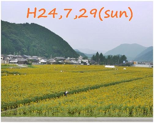 1_20121205231536.jpg