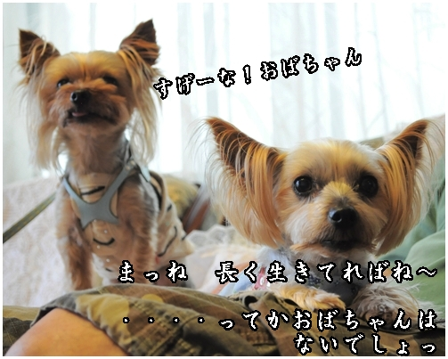 23_20120717220939.jpg