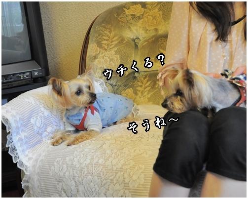 24_20120717220938.jpg