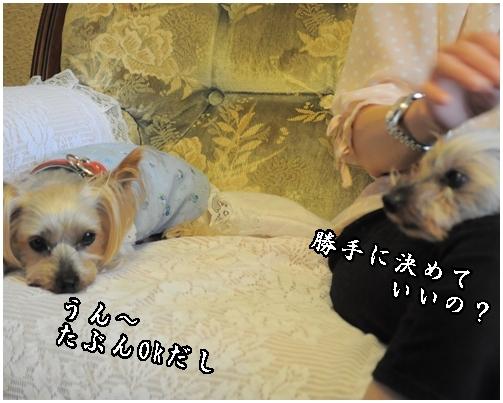 25_20120717221012.jpg
