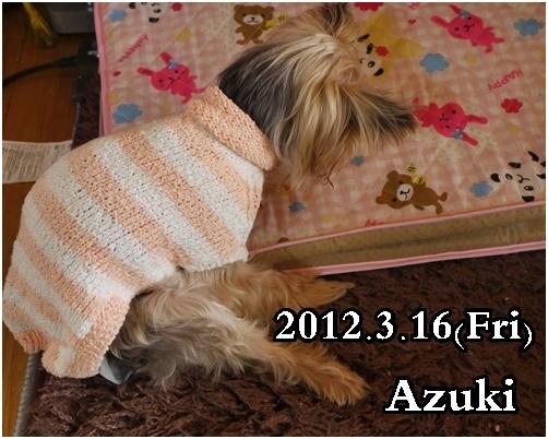 2_20120317224341.jpg