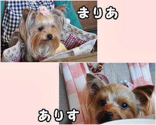 2_20120408215557.jpg