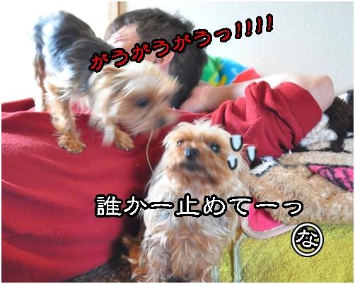 4_20120426183017.jpg